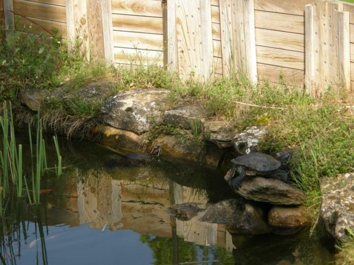 Zona 2 tortugas_resultado