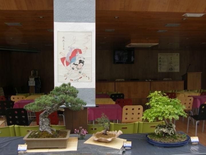 expo-bonsáis 067_resultado